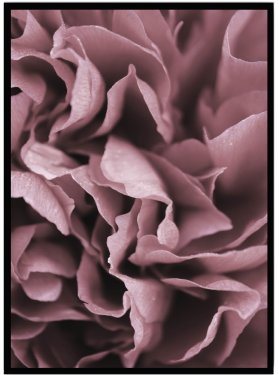 poster pink blomma