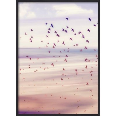poster birds pink